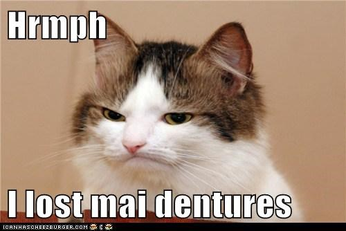 best of the week cat dagnabbit dentures Hall of Fame I Can Has Cheezburger lost my dentures teeth - 5534733056