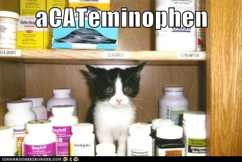acetaminophen cabinet caption captioned cat kitten medicine medicine cabinet pun - 5535010560
