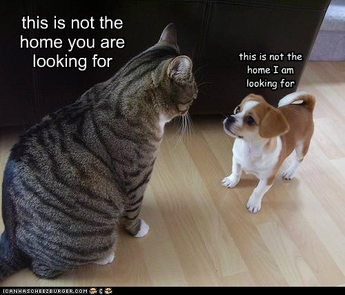 caption,captioned,cat,dogs,for,force,home,hypnosis,looking,not,puppy,quote,star wars,this,you