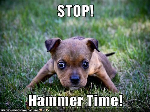 best of the week break it down dance dancing grass Hall of Fame hammertime mc hammer puppy stop whatbreed - 5537669632