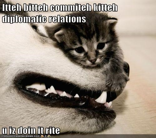 cat,diplomat,diplomatic relations,friends,friendship,husky,kitten