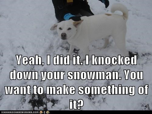 dogs,oops,outdoors,snow,snowman,what of it,whatbreed