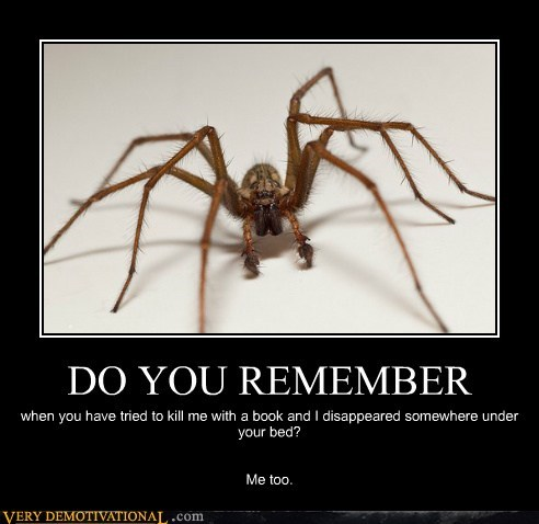 creepy spider Terrifying wtf - 5539340288