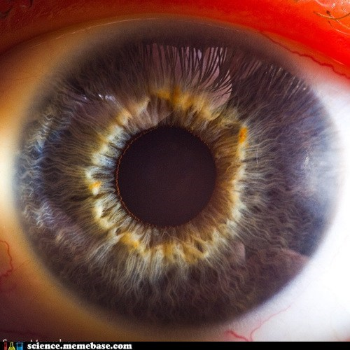 eye,filament,lens,Life Sciences,pigment