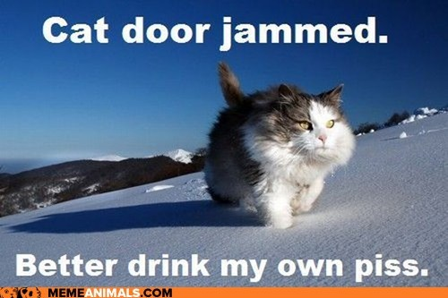 bear grylls,cat,cat door,jammed,piss,snow