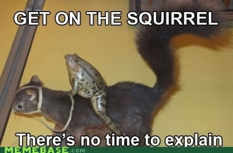 animals,frog,lemmiwinks,Memes,no time to explain,squirrel