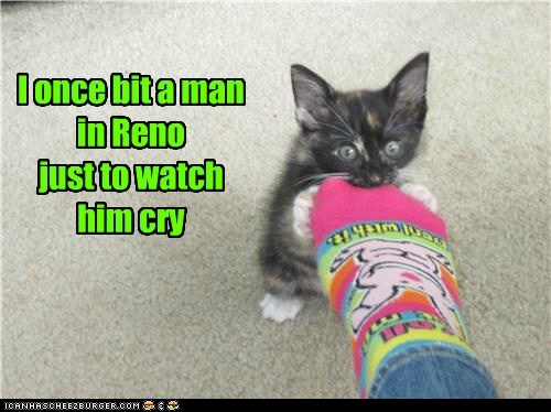 best of the week,bit,caption,captioned,cat,cry,foot,fulsom prison blues,Hall of Fame,johnny cash,kitten,lyric,man,pain,parody,reno,sock,song