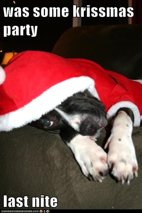 christmas Christmas party hangover hungover Party pit bull pitbull santa santa costume