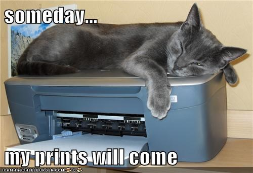 caption captioned cat come homophone prince printer prints pun sleeping Someday waiting will - 5540574720