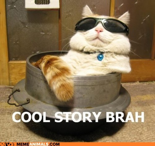 cat,cool story bro,sunglasses chillwave