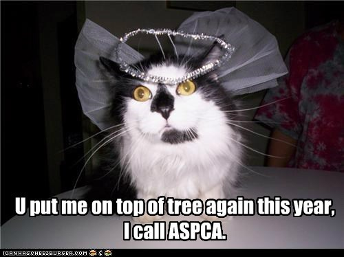 again angel aspca call caption captioned cat christmas costume dressed up promise this year threat top topper tree - 5541138432