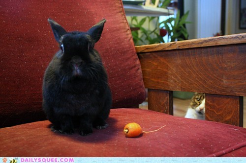 acting like animals annoyed bunny carrot cat disappointed do not want nom nomming noms rabbit tiny upset