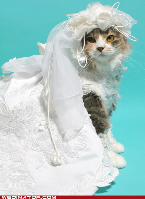 cat,bride,dress,veil
