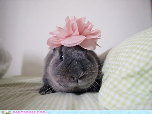 accessory,bow,bunny,fashion,frilly,happy bunday,pink,rabbit,style,swag