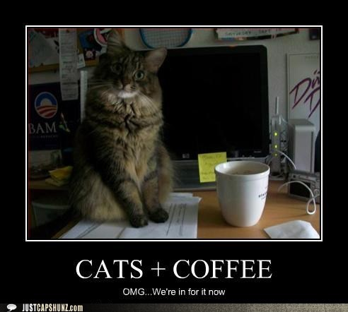 caption cat coffee I Can Has Cheezburger omg - 5541396224