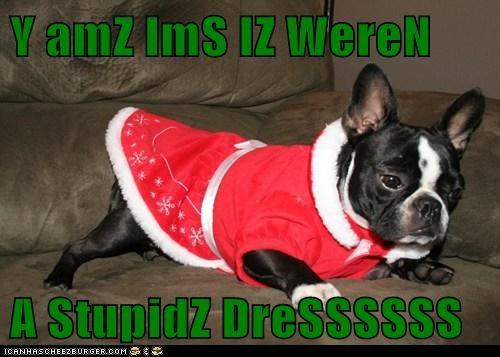 Cheezburger Image 5541476864