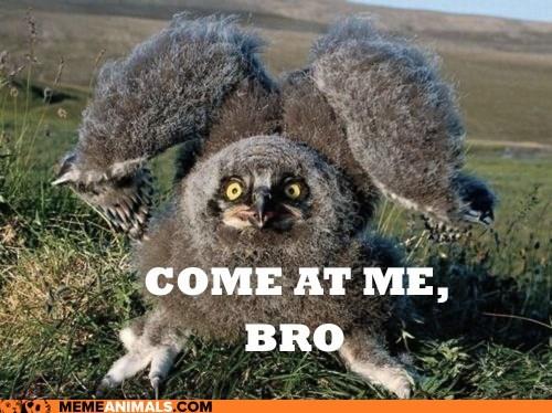 birds,captions,come at me bro,owls