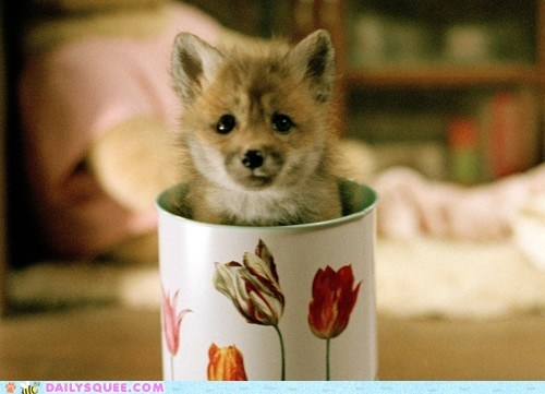 acting like animals,apple cider,baby,confused,do not want,fox,kit,mug,not,stuck,trapped