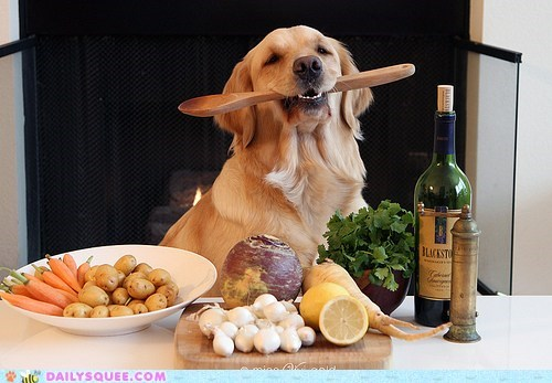 acting like animals confused cooking dogs golden retriever is this real life kitchen no idea spoon wat - 5541741568