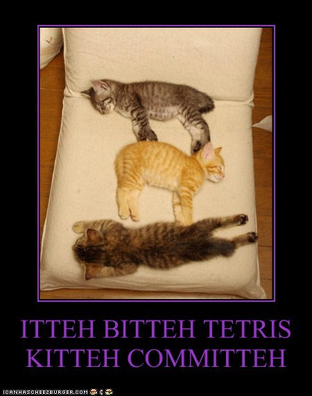 caption captioned cat Cats itteh bitteh kitteh committeh kitten sleeping tetris - 5541921280