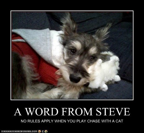 A WORD FROM STEVE NO RULES APPLY WHEN YOU PLAY CHASE WITH A CAT