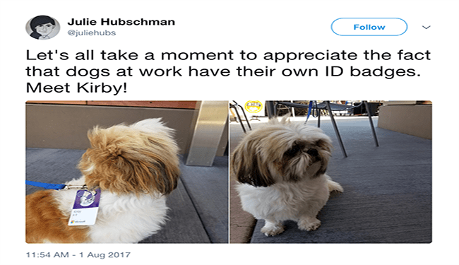 dogs twitter working dogs dog tweets cute funny dogs tweets funny - 5542149