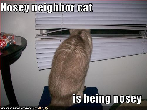 Nosey neighbor cat is being nosey - Cheezburger - Funny Memes