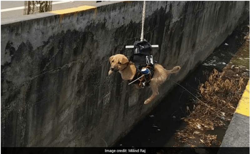 dogs cute dogs saving dogs puppy cute savior story - 5542661