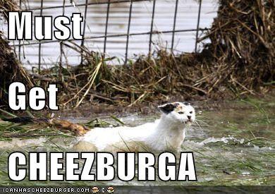Cheezburger Image 5542868224