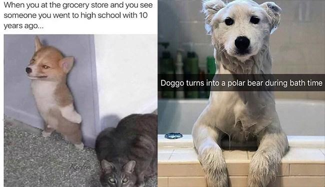 dog memes funny memes Memes animal memes animals cat memes - 5542917
