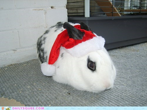 bunny,costume,dressed up,Father,happy bunday,rabbit,reader squees,santa,twelve squees of christmas,well-wishing