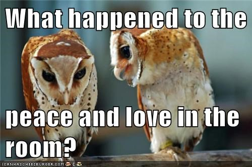 animals birds love owls peace what happened - 5543365888