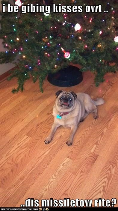 christmas tree confused kisses mistletoe pug - 5544433920