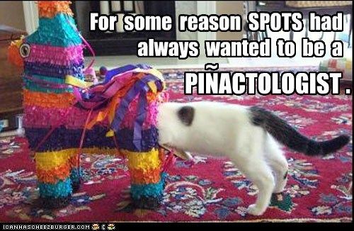 caption,captioned,career,cat,doctor,dream,dream job,job,lolwut,pinata,proctologist,pun