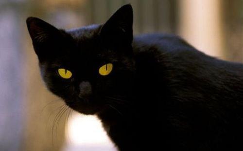 fat cat kitteh - 5544672256
