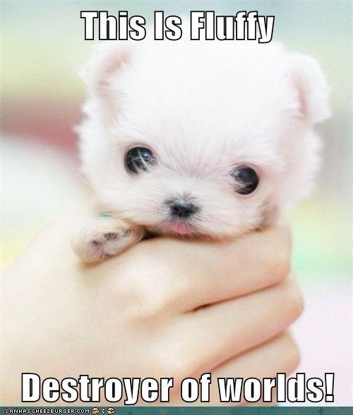 baby destroy Destroyer of Worlds destruction Fluffy puppy whatbreed - 5544676864