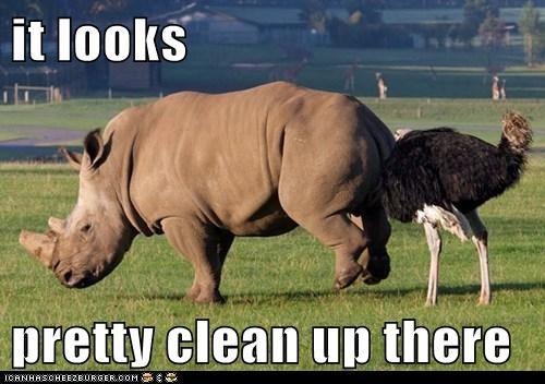 animals,ostrich,personal care,rhino,rhinoceros