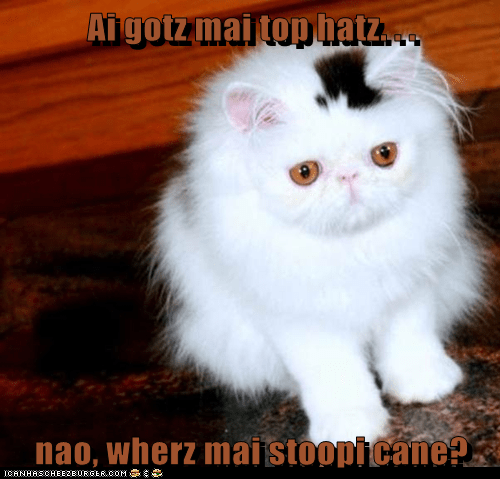 Cheezburger Image 5545989888