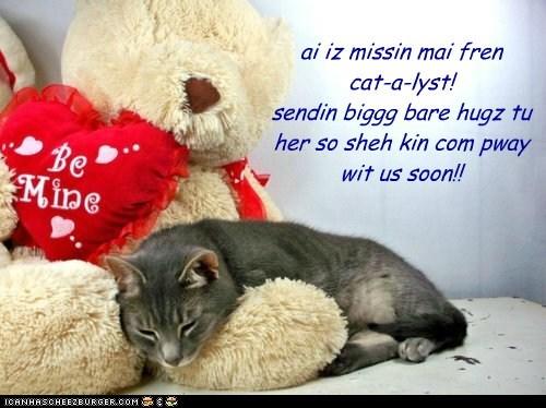 ai iz missin mai fren cat-a-lyst! sendin biggg bare hugz tu her so sheh kin com pway wit us soon!!