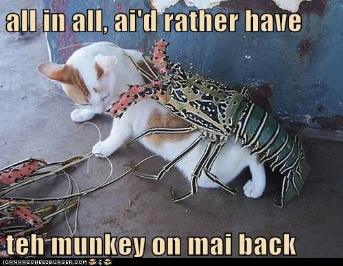 cat I Can Has Cheezburger lobster lobster on your back monkey on your back wtf - 5546655488
