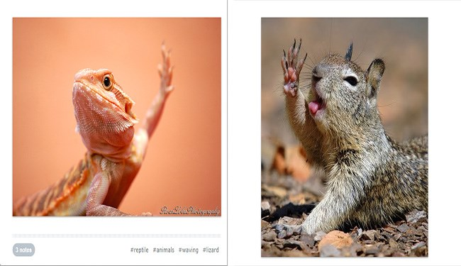 squirrel and lizard waving