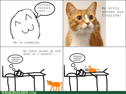 cute kitty Rage Comics senses