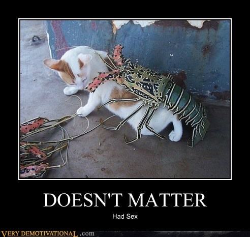 cat doesnt matter hilarious lobster sexy times - 5547538688