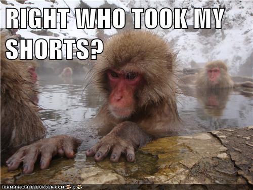 animals,clothing,hot springs,japanese macaque,shorts,swim,swim trunks,swimming