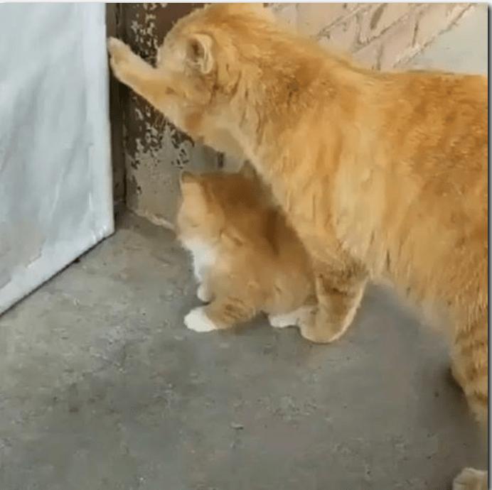 cute videos instagram kitten cute cute cats Cats funny Video - 5547781