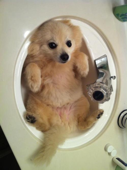 doggeh Sundog - 5548288256