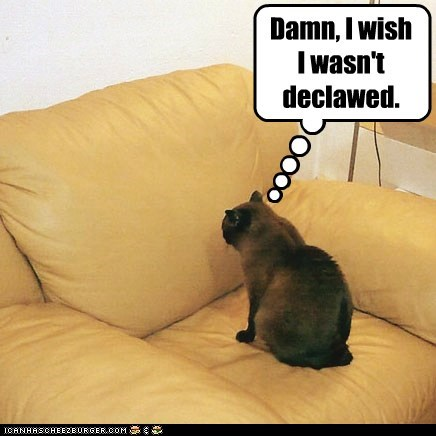 Damn, I wish I wasn't declawed.