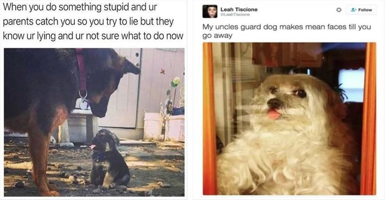 dogs dog memes laugh Memes funny - 5549317