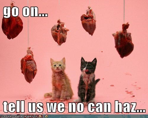 Cats haz cheezburger heart kitten weird kid - 5549530368