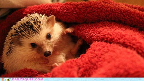 babbling,baby,hedgehog,reader squees,tiny,unbearably squee